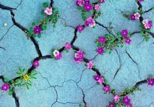 Build Resilience - flowers grow in many places