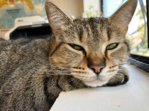 Cat resting with eyes half closed - image for Stuck in low activity phase at work - meditation exercise